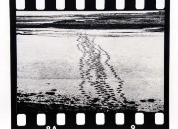One path, twelve views (nine)